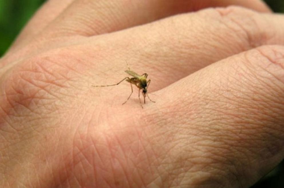 Se incrementaron los casos de dengue en la Provincia