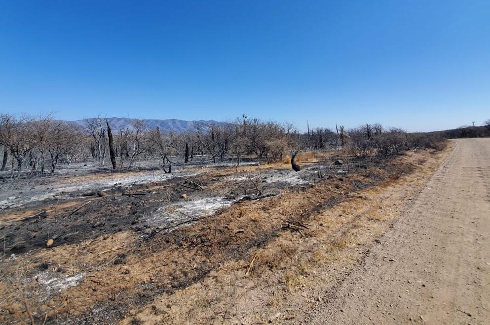 Incendios: ya se cargan las Declaraciones Juradas por Desastre Agropecuario